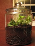 Terrarium - After